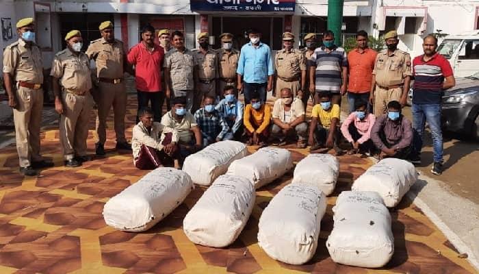 Basti News: 9 गांजा तस्कर गिरफ्तार,  40 लाख रुपये का गांजा बरामद